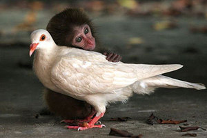 Monkey_dove_little_friends